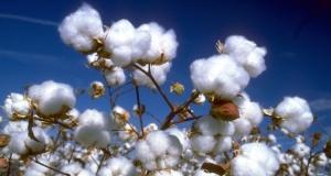 2.0.1 Header Cotton